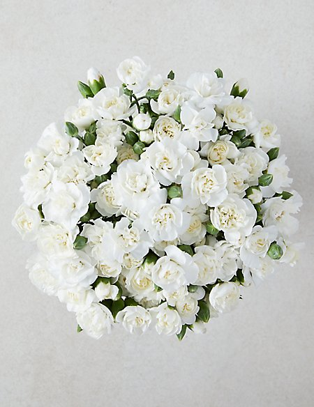 The Collection Sweet Avalanche™ Roses