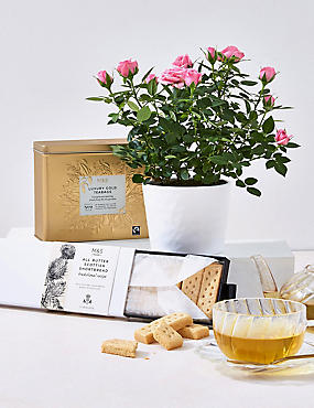 White Rose Plant, Tea & Shortbread Hamper