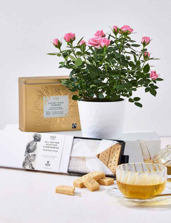 Shortbread Biscuits Luxury Tea White Rose Plant Hamper