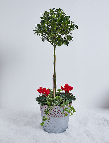 Holly & Ivy Doorstep Planter