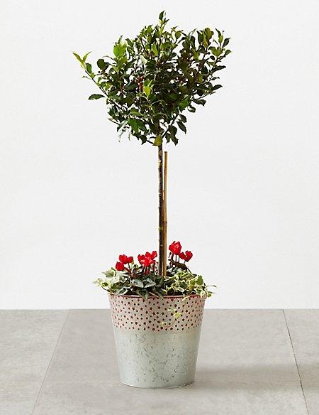 Festive Doorstep Planter
