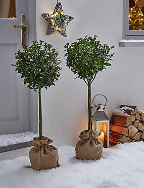 Christmas Plant Doorstep Collection