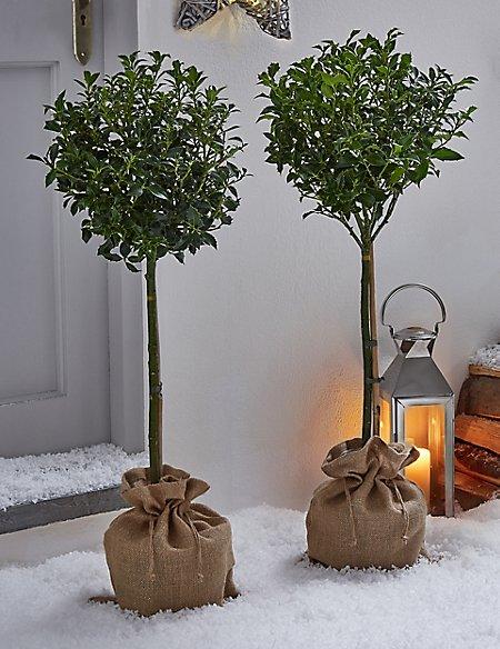 Holly Trees & Star Wreath