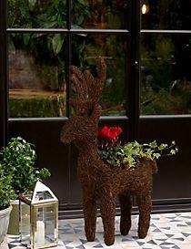 Doorstep Reindeer Planter