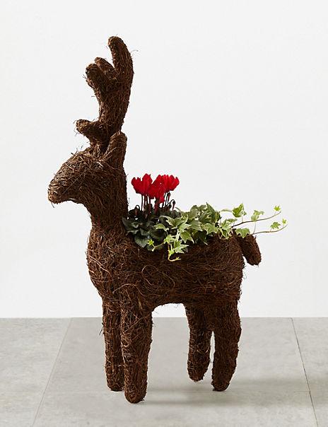 Novelty Doorstep Reindeer Planter