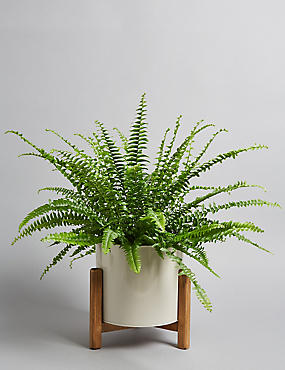 Fern House Plant on Stand