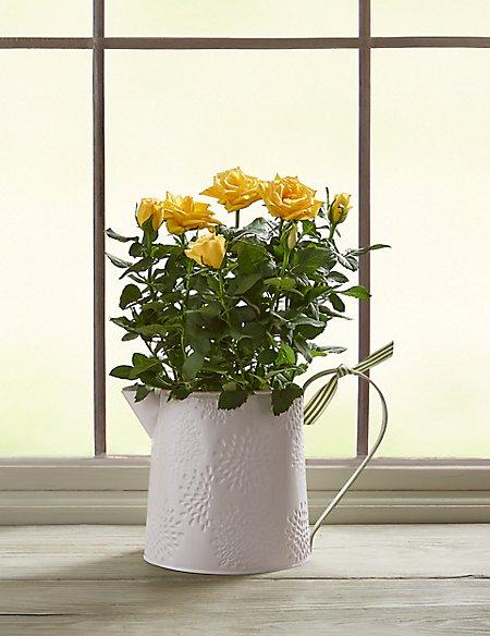 Autumn Yellow Rose Jug