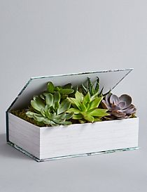 Succulent Book (Free Swiss Chocolates worth £6 for a limited time)