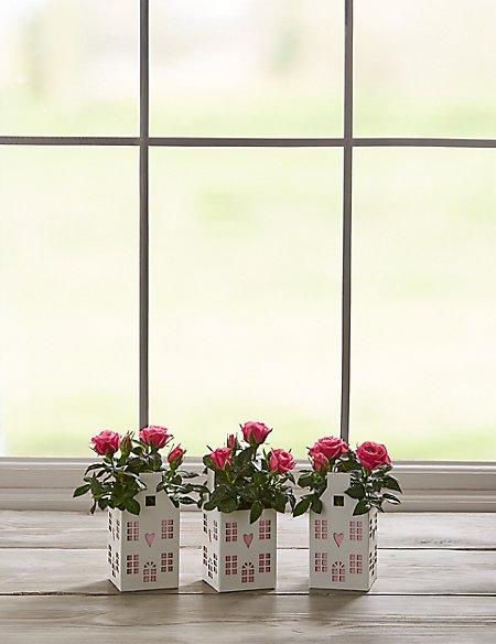 Miniature Rose House Trio