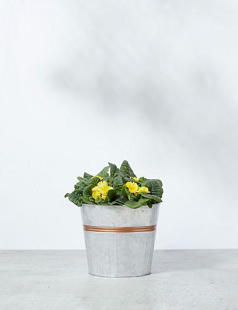 Autumn Flowering Barrel