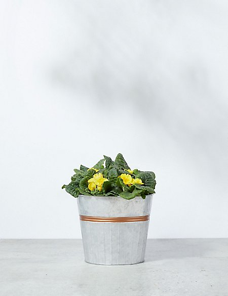 Flowering Barrel