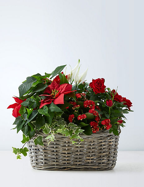 Large Christmas Flowering Basket