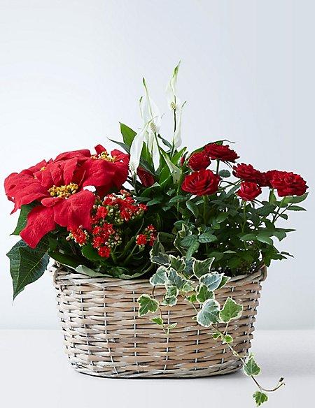 Large Christmas Flowering Basket