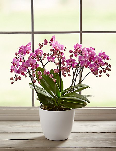 100 Orchid Flowers
