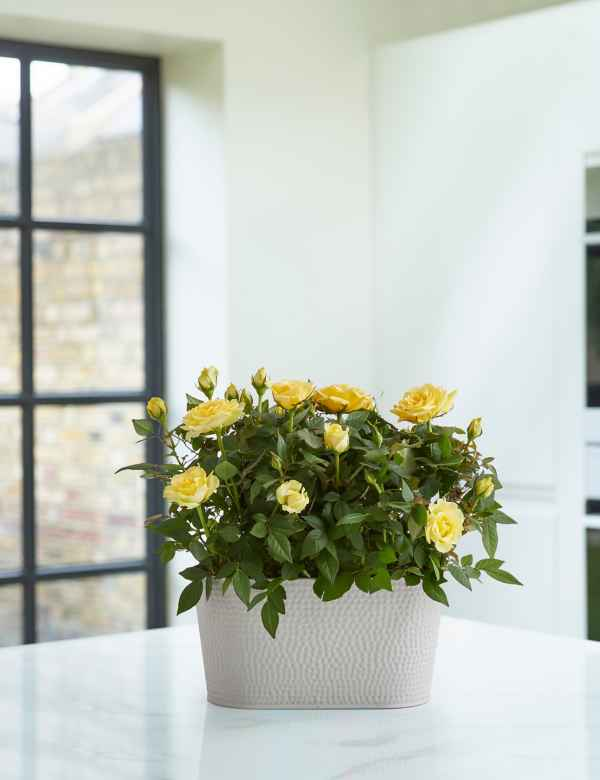 Indoor Plants | House Plants For Next Day Delivery | M&S on colorful house plants, non-toxic house plants, small house plants, soothing house plants, robust house plants, weather proof house plants, hypoallergenic house plants, fragrant house plants, lightweight house plants, compact house plants, organic house plants, portable house plants, rugged house plants, elegant house plants, night blooming house plants, refreshing house plants, cool looking house plants, inexpensive house plants, strong house plants, easy to maintain house plants,