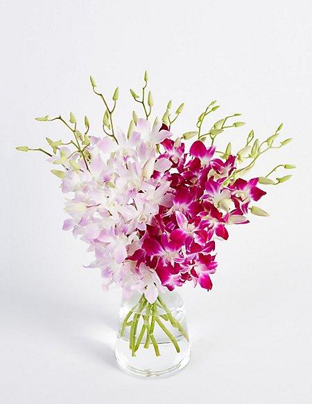 Dendrobiums (Pre Order)