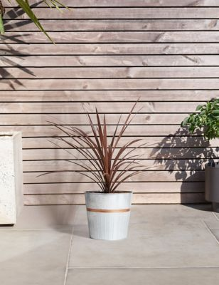 Marks \u0026 Spencer & House Potted \u0026 Garden Plants | Hanging Basket Plants | M\u0026S