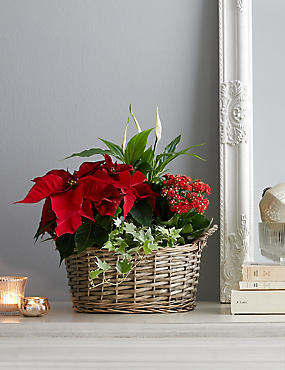red christmas flower basket available for delivery from 15th november 2018 - Red Christmas Flowers