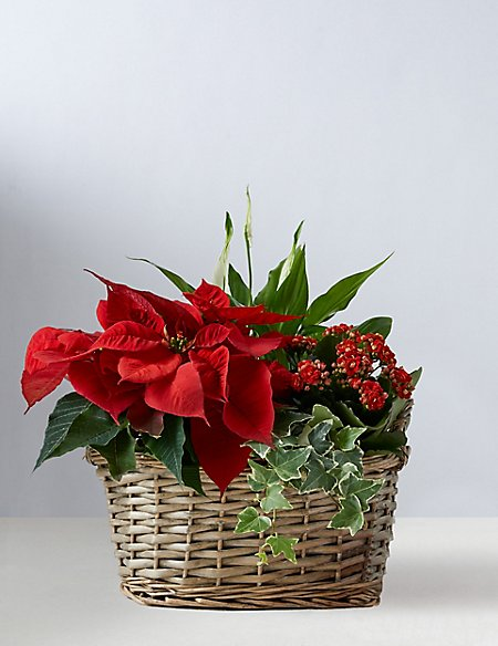 Red Christmas Flower Basket