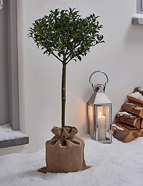 Festive Holly Tree