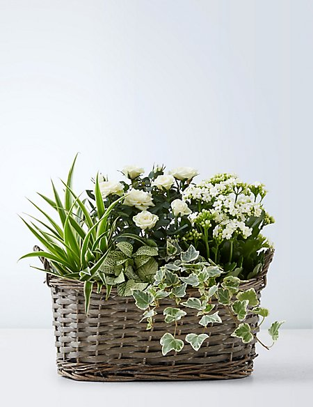 Large Autumn Willow Indoor Basket (Available for delivery from 29th Aug 2018)