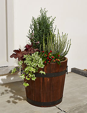 Extra Large Flowering Barrel