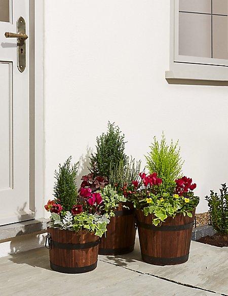 Extra Large Flowering Barrel