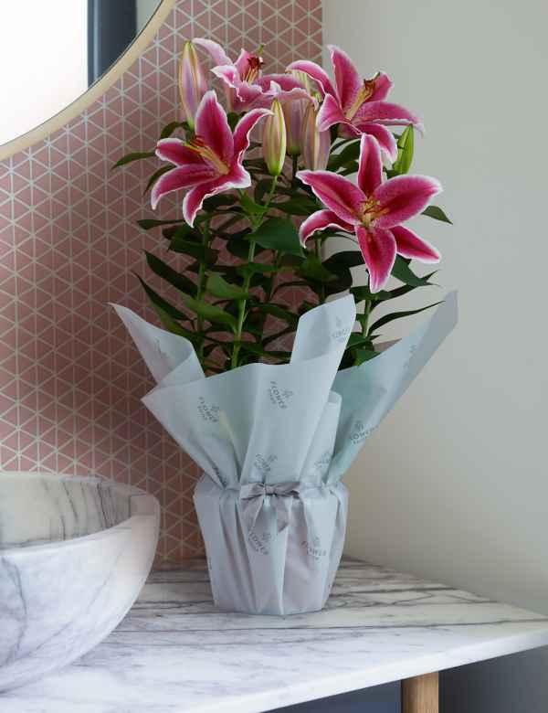 Fantastic House Potted Garden Plants Hanging Basket Plants Ms Interior Design Ideas Oteneahmetsinanyavuzinfo