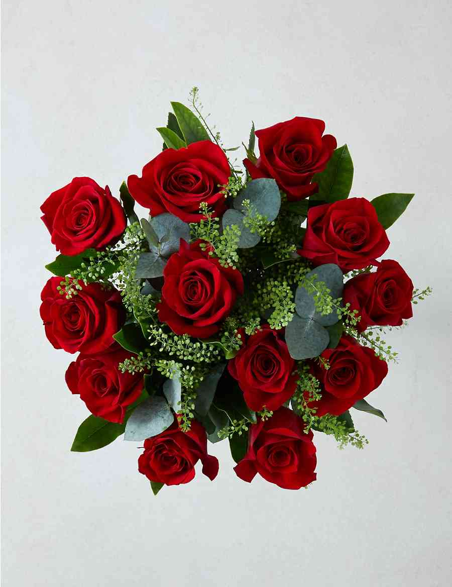 The collection freedom red roses ms the collection freedom red roses izmirmasajfo