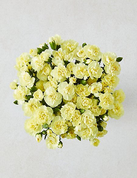 Pink Carnation and Alstromeria Bouquet (Available for delivery from 30th August 2018)