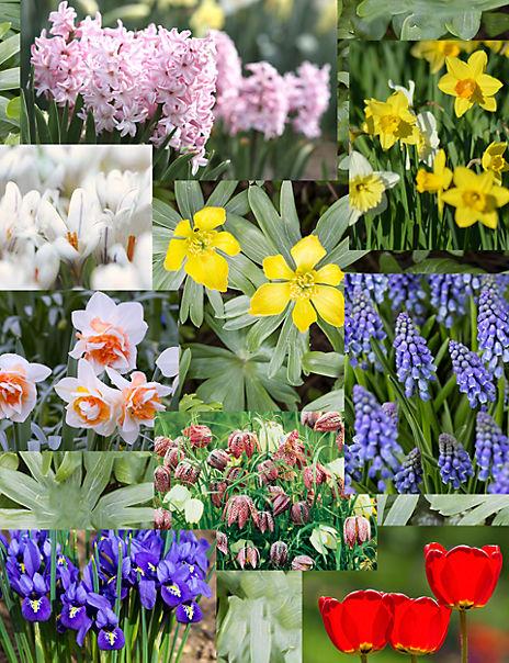 Spring Flowering Bulb Crate
