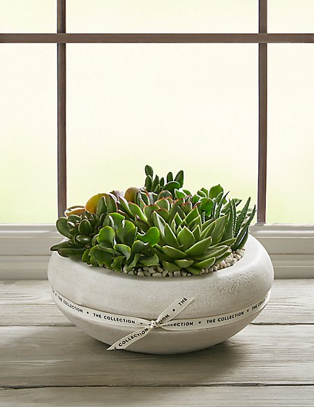 The Collection Succulent Planter