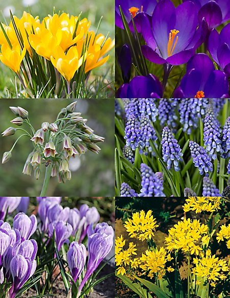 Postal Bulbs: Happy Bees Collection