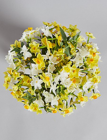 Mother's Day Narcissi Jug