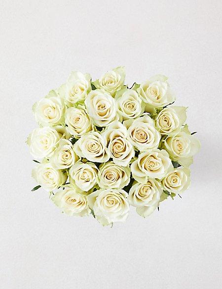 Classic Roses White