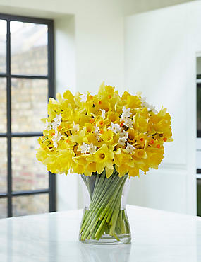 100 Stem Daffodil & Tulip Bouquet