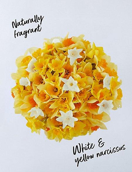 100 Stem Daffodil & Tulip Bouquet