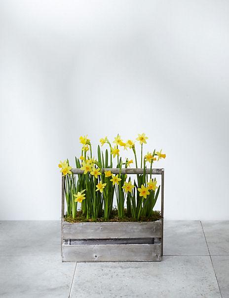 Windowsill Bulb Planter