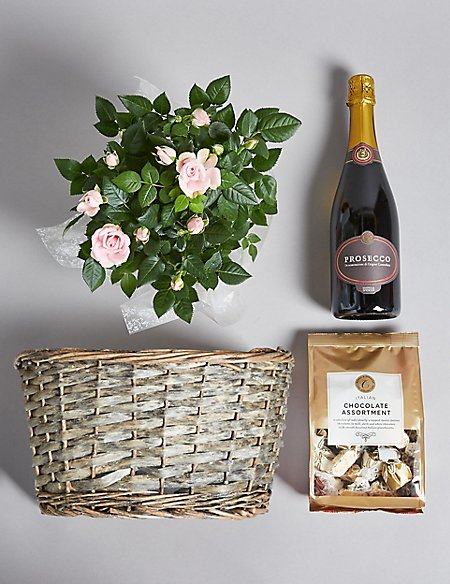 Pink Rose Plant, Prosecco & Italian Chocolates Hamper