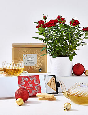 Festive Tea & Rose Plant Hamper