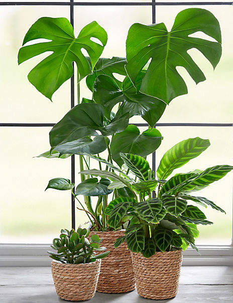 The Houseplant Collection
