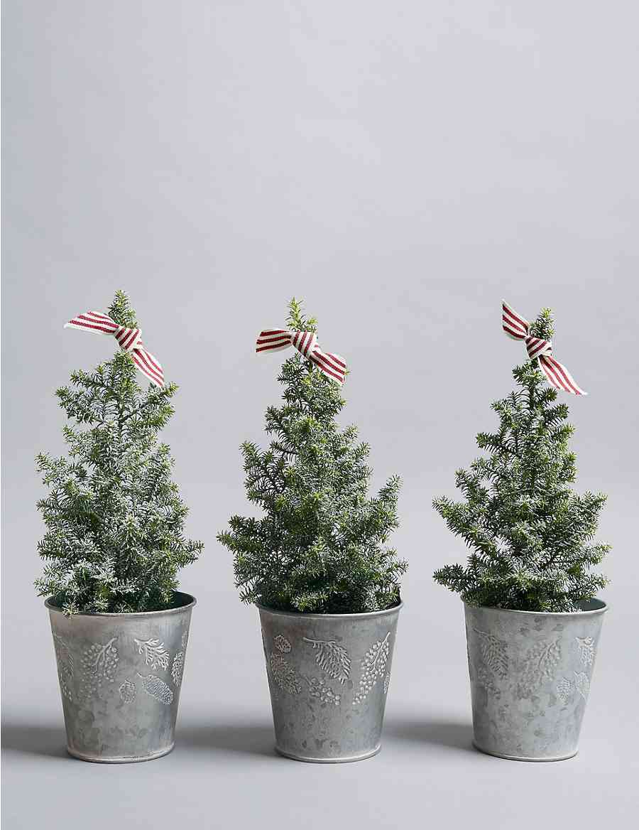 Mini Real Christmas Tree Trio | M&S
