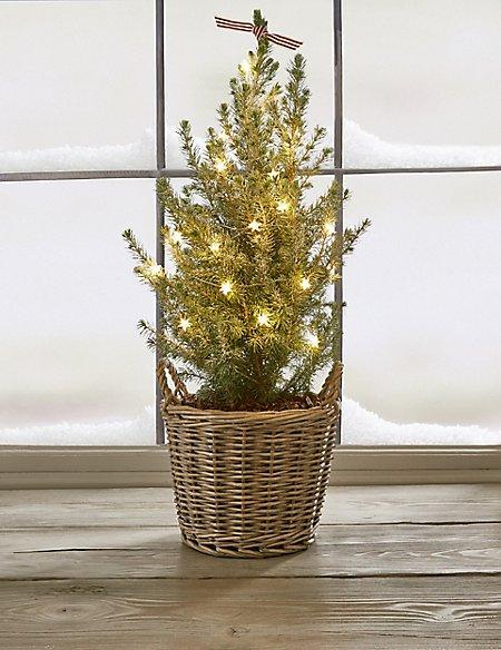 Real Christmas Tree in Basket