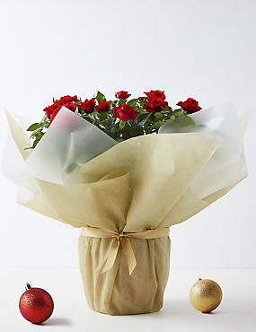 Large Christmas Gift-Wrapped Red Rose
