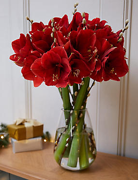 The Collection Red Amaryllis Bouquet