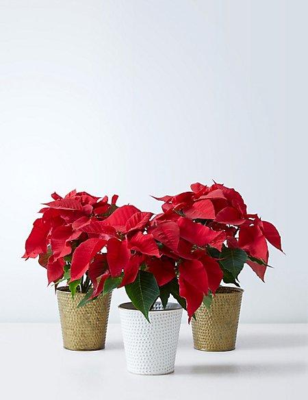 Christmas Poinsettia Glass Trio
