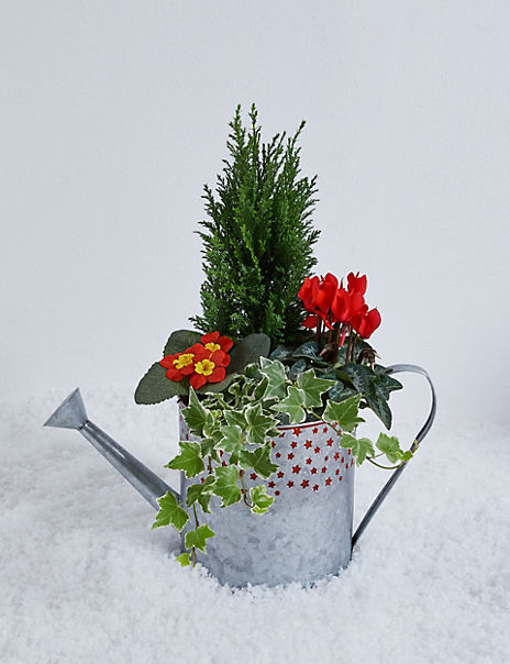 Festive Watering Can Planter