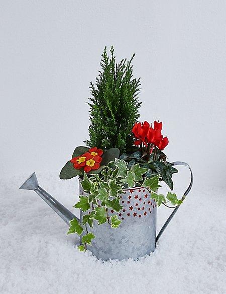 Festive Watering Can Garden Planter
