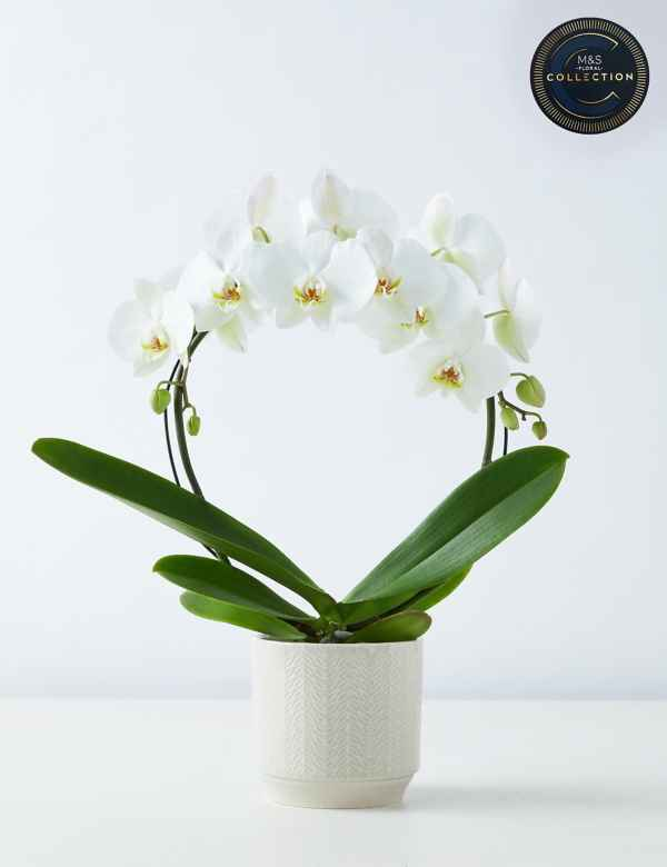 Orchids Orchid Flowers Plants M S