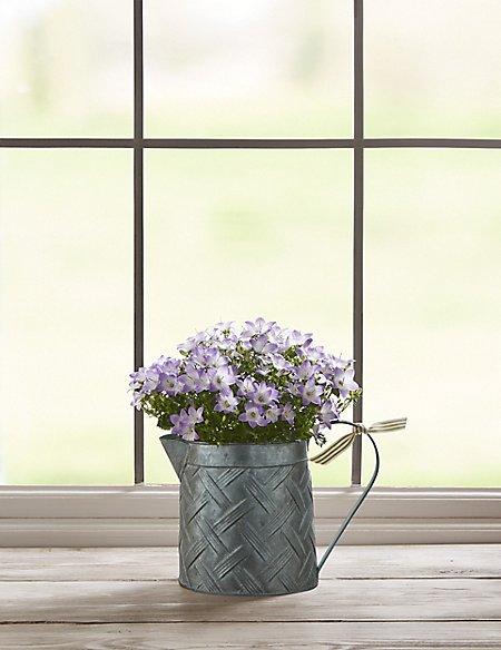 Spring Campanula Jug (Available until 5th May)